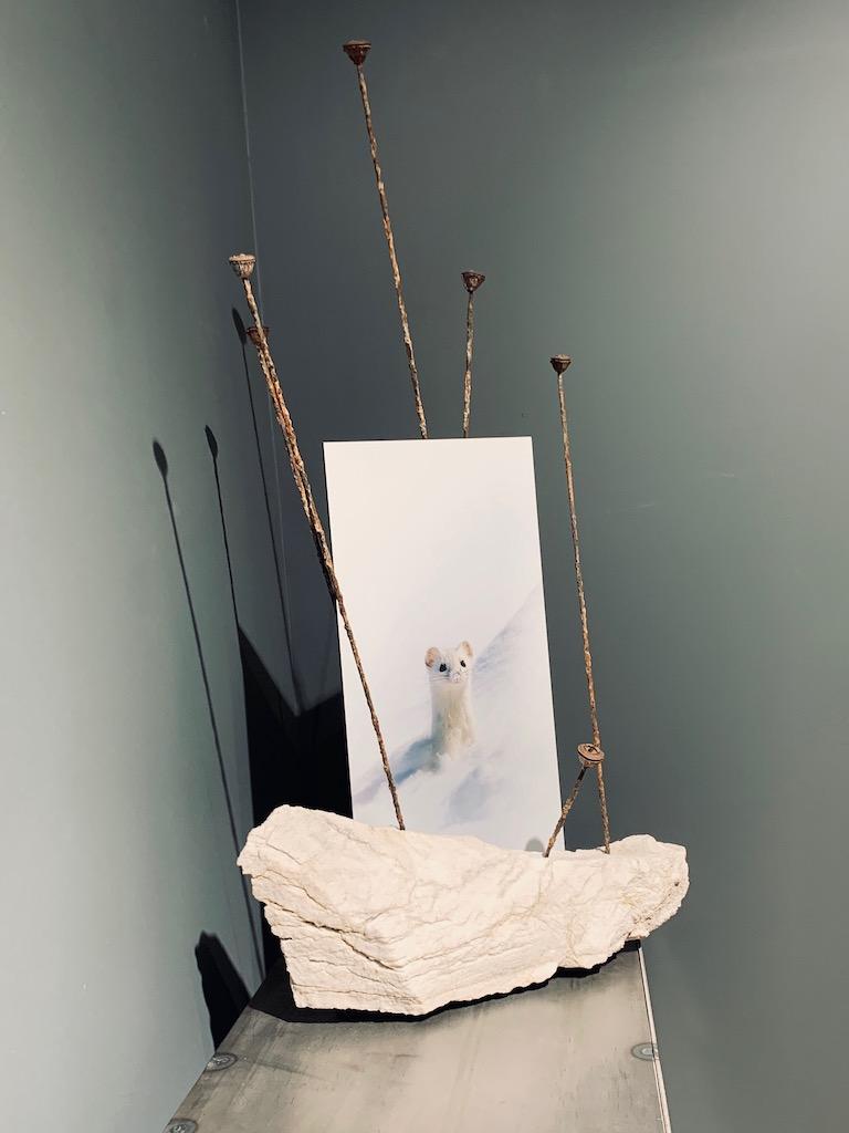 Hermine - Photographie/Gypsemétal, fuits d'eucalyptus 75 x 40 cmimage 41 x 20 cm
