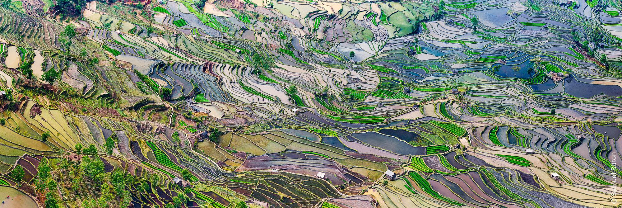 Rizières / Rice Fields