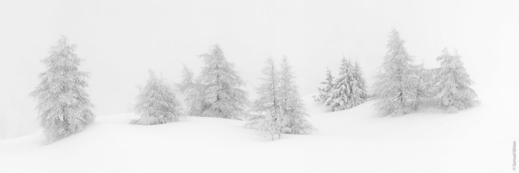 Arbres sous la neige / Trees under the snow